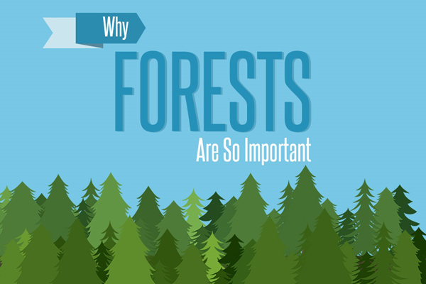 Green Behavior: Infographic: The Importance of Forests