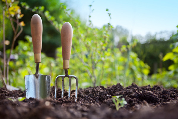 Green Behavior: How to Start an Organic Garden