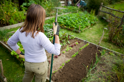 Green Behavior: How To Build A Sustainable Vegetable Garden